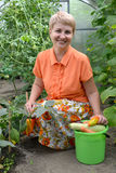 The woman of average years reaps a crop of vegetables in the greenhouse Stock Image