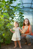 Woman and baby girl with cucumbers  in hothouse Stock Photo