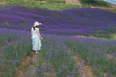 Woman'back in Lavender Field stock photography