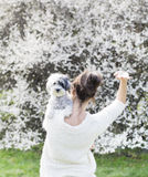 Woman in back waiving and  hugging   her white poodle  dog in a spring garden Royalty Free Stock Images