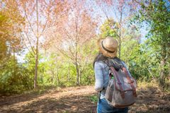 Woman backpack in the forest. With nature beautiful background Stock Images