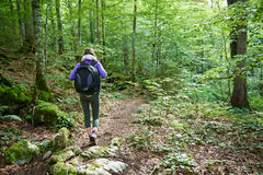Woman with backpack hiking into the forest Stock Photography