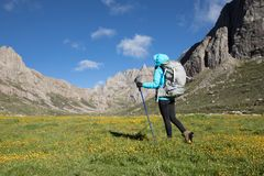 Woman with backpack walking on flowering high altitude mountain. Young woman with backpack walking on flowering high altitude mountain Stock Photo