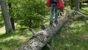 Woman with backpack walking in forest area balancing on a trunk. Descending in a valley stock video