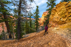 Woman Backpacker hiking down the Ponderosa Canyon Bryce National Royalty Free Stock Image