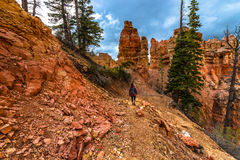 Woman Backpacker hiking down the Ponderosa Canyon Bryce National Royalty Free Stock Images