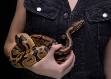 Woman with ball python Stock Images