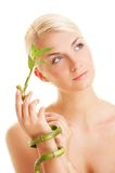 Woman with a bamboo plant Stock Images