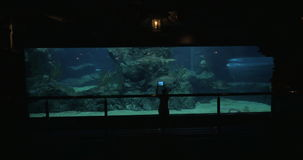 Woman in Bangkok, Thailand at the oceanarium of Siam Ocean World take pictures on tablet of fish. Young woman in Bangkok, Thailand at the oceanarium of Siam stock video