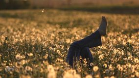 Woman barefoot free over dandelion field in bloom at sunset. Full HD stock video footage