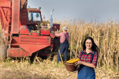 Woman with basket in corn field Stock Images