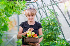 Woman with basket of greenery and vegetables in the greenhouse. Time to harvest. Royalty Free Stock Photo