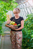 Woman with basket of greenery and vegetables in the greenhouse. Time to harvest. Stock Image