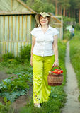 Woman with basket of harvested vegetables Royalty Free Stock Image