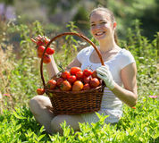 Woman with basket of tomato Stock Images