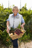 Woman with basket of tomatoes, smiling, portrait Royalty Free Stock Photo