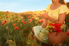 Woman with basket of wildflowers in sunlit poppy field, closeup stock photos