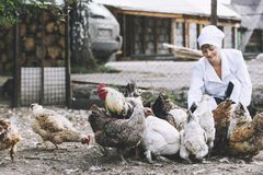 Woman in Bathrobe smiling young veterinarian checks the hens on. A small private farm Stock Photography