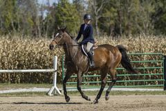 Woman and bay galloping at a fall horse show. Woman riding her bay gelding galloping at a fall horse show Royalty Free Stock Images