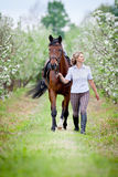 Woman and bay horse in apple garden. Horse and beautiful lady walking outdoor. Horse rider. Equestrian sport stock image