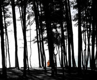 Woman on a beach behind black and white backlit beach pine forest Royalty Free Stock Photo
