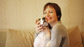 Woman with beagle. Dog, sitting on the sofa indoor and wipes by his ears tears playfully stock video footage