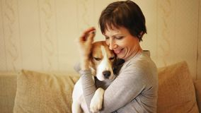 Woman with beagle. Woman pulls long ears of beagle dog, showing them, lifting them up to form a house stock video