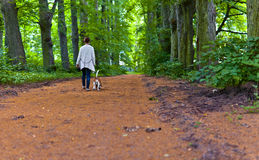 Woman with beagle walking in the park Stock Image