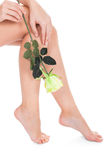 Woman With Beautiful Legs Holding Rose Royalty Free Stock Photography
