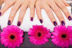 Woman with beautiful manicured purple nails Royalty Free Stock Photography