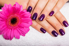 Woman with beautiful manicured purple nails. Woman with beautiful manicured nails covered with modern purple nail varnish, enamel or lacquer displaying her Royalty Free Stock Images