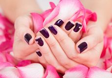 Woman with beautiful nails holding petals Royalty Free Stock Image