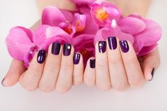 Woman with beautifully manicured nails Royalty Free Stock Image
