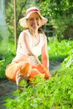 Woman  in bed of carrot Stock Photos
