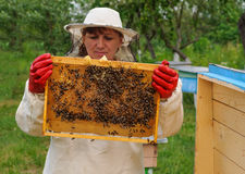 Woman Beekeeper holding frame of honeycomb with bees Royalty Free Stock Photos