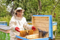 Woman beekeeper looks after bees Royalty Free Stock Images