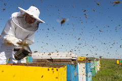 Woman beekeeper smoking the beehives. Horizontal front view of a beekeeper smoking the honeycomb of a beehive with bees swarming around them Stock Images