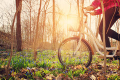 Woman on a bicycle in the forest in spring. At evening with beautiful sunlight Royalty Free Stock Photography