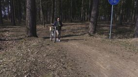Woman with bicycle on path in park. In summer day stock video footage