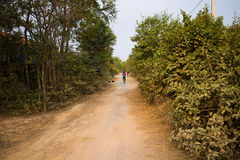 Woman Bicycling on a Road in Rural Cambodia Asia Dogs Royalty Free Stock Photography