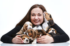 The woman and big group of a beagle puppies Stock Photo