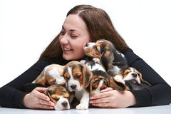 The woman and big group of a beagle puppies Royalty Free Stock Image