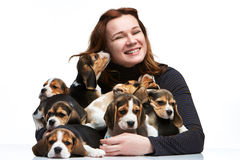 The woman and big group of a beagle puppies Stock Image