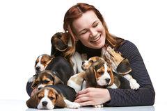 The woman and big group of a beagle puppies Royalty Free Stock Photos