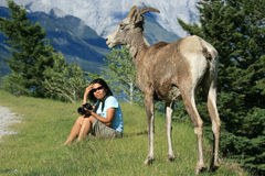Woman with Bighorn Sheep Royalty Free Stock Photos