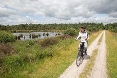 Biking woman in Dutch national park with forest and wetlands royalty free stock images