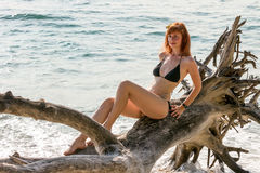 Woman in bikini posing on branchy log in water Royalty Free Stock Photo