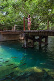 Woman with bikini stands on the bridge ,Bonito,Brazil Stock Images