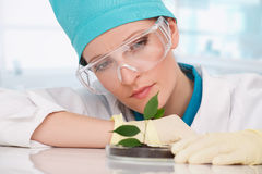 Woman biologist with plants Royalty Free Stock Photos