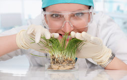 Woman biologist with plants Stock Images